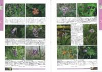 ネイチャーガイド 丹沢の自然図鑑