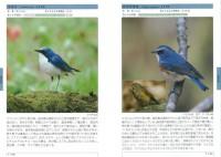 栃木の野鳥図鑑