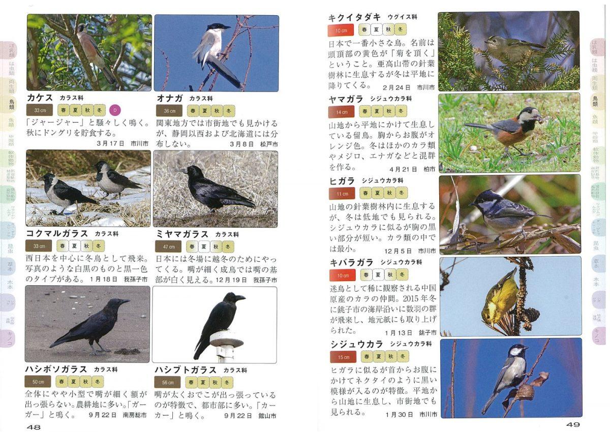 千葉いきもの図鑑 改訂版