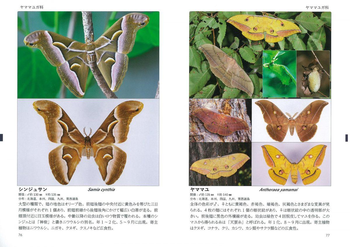 蛾の生態標本図鑑