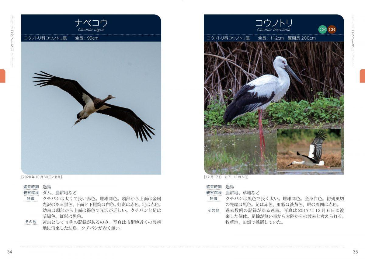 石垣島の野鳥図鑑